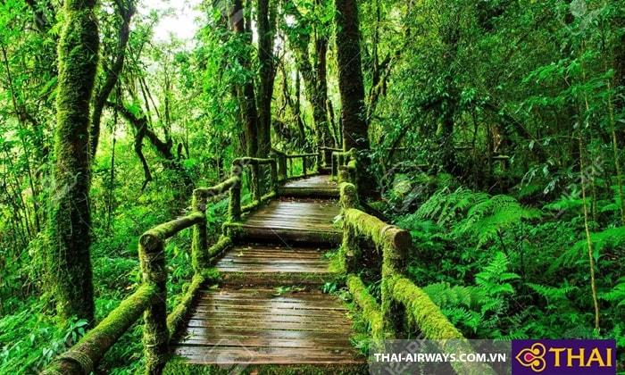 Rain forest at Ang Ka